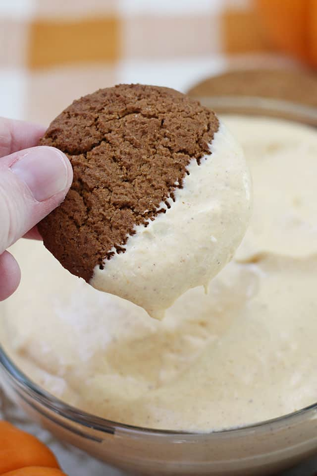 A ginger snap cookie being dipped into pumpkin dip